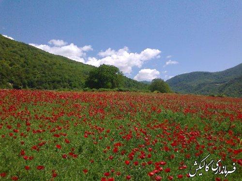 جاذبه های گردشگری گالیکش - قسمت1