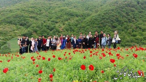 پنجمین جشنواره شقایقهای استان گلستان در روستای «پادلدل» گالیکش برگزار شد.