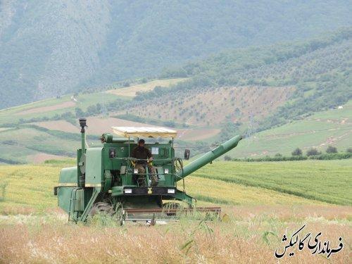 آغاز برداشت محصول کلزا در اراضی کشاورزی شهرستان گالیکش
