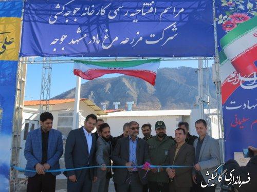کارخانه جوجهکشی شرکت مزرعه مرغ مادر مشهد جوجه در شهرستان گالیکش افتتاح شد