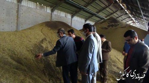 بازدید فرماندار گالیکش از مراکز خرید محصول کلزا شهرستان
