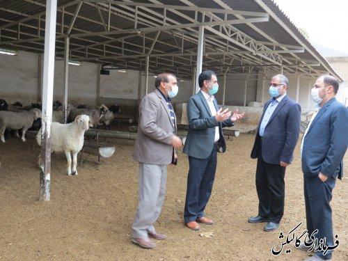 بازدید فرماندار گالیکش از دو واحد تولیدی پرورش گوسفند و ماهیان سردآبی در شهرستان
