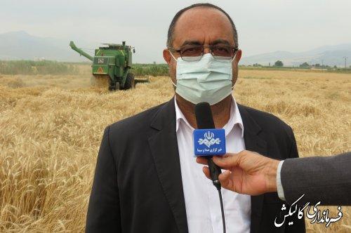 پیشبینی برداشت ۳۸ الی ۴۲ هزار تن گندم در سال جاری در شهرستان گالیکش
