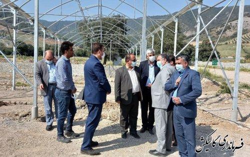 راهاندازی پروژه دهکده گیاهان دارویی باعث ترویج کشت گیاهان دارویی در منطقه میشود